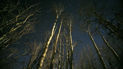 Stars at night with changing moon shadows on aspen trees,Utah