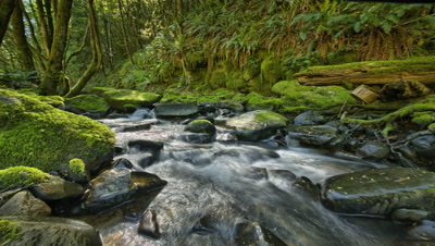 Stream in forest with moss and ferns,Oregon