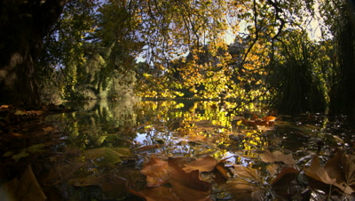 Pond reflecting trees with Autumn color,Sonoma,CA