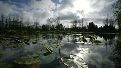 Lake with Lily Pads,Oregon