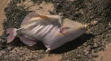 Mass Fish Die Off Dead Fish On Beach  Ningaloo Reef Western Australia