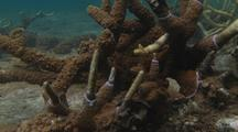 Damaged Coral New Growth