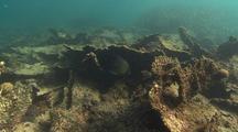 Dead Coral Track
