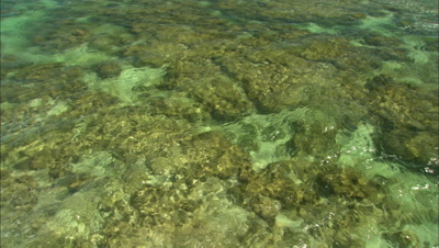 Looking Down At Coral Reef Lagoon With Excellent Coral Cover