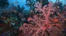 Edited Compilation, Coral Reef Scenics And Fish Schools, Coral Sea Dreaming
