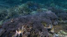 Gliding Over Shallow Water Coral Reef Under Rippling Light