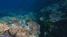 Coral Reef Edge With Fish Under Rippling Light