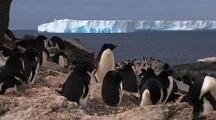 Adelie Penguins On Rocky Shore With Tabular Icebergs In Background