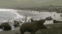 Antarctic Fur Seals And King Penguins On Beach