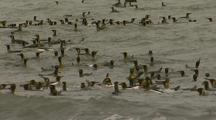 King Penguins Swimming In The Water