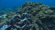 Old Deepwater Hard Coral Reef
