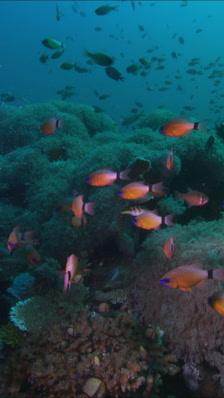 Vertical Underwater Stock Footage