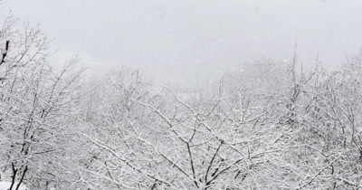 Heavy Snow Falling In A Forest Of Trees During A Winter Storm