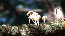 Mushrooms & Lichen On A Rain Forest Log