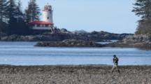 Fly Fisherman Walks On Beach In Front Of Lighthouse