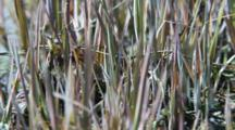 Sedges And Grasses