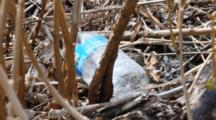 Pollution: Plastic Bottle In The Brush