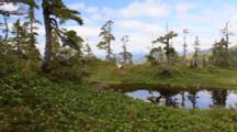 Alpine Environment  Of The Tongass National Park