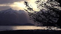Tree Limbs In Beach Scenery/Sunset