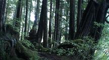 A Pan Of The Tongass Rain Forest.