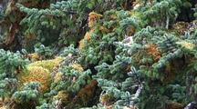 Pan Of Tree & Tree Moss