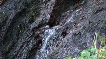 Water Pouring From Saturated Rain Forest Moss, Rock, And Forest Debris.