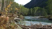 A Very Clear Mountain Stream And Old Growth Forest