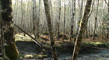 A Pan Of A Creek Bottom  And Second Growth Forest
