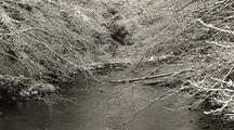A Winter Snow  Scene.  A Small Stream.