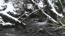Winter Scene. A Mountain Stream & Falling Snow.