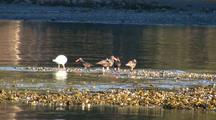 Sea Birds: Oystercatchers And Gulls