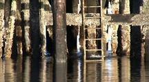Dock Piling. The Piling Are Covered With Barnacles