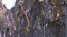 Winter Scene: Water Dripping From Icicles.