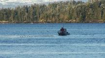 Alaska Fish & Game Take A Fish Sample During  The  Sitka Sound Sac Roe Herring Fishery.