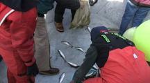 Fish Technicians & Herring