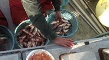 Research  Fish Technicians & Herring