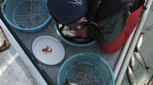 Research Fish Technicians & Herring