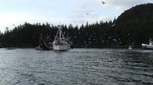 Commercial Fishing: Fish Tenders And Gulls