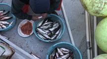 Fish Technician & Herring
