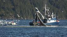 Commercial Fishing: Sitka Sound Sac Roe Herring Fishery & Bald Eagles And Gulls