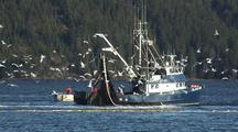 Diving Bald Eagles And Gulls: Sitka Sound Sac Roe Herring Fishery And Bald Eagles