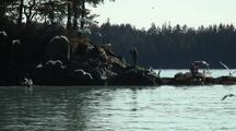 Cinematographer Films Birds Chasing Spawning Herring