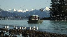Alaska Natives Fish For Herring Using A Throw Net/The Sitka Sound Sac Roe Herring Fishery