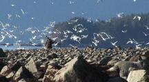 International Film Crew Cinematographer Scares Up The Birds
