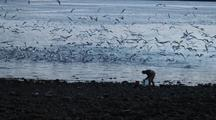 Sea Birds Gather  While A Alaska Native Fished For The Herring
