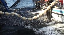 Alaska Herring Fishery Stock Footage