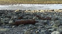 Old Mining Debris Left On A Beach