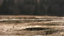 Ground Fog In A Wetland