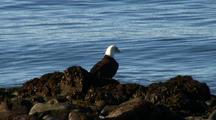 Bald Eagle & Ocean Surf
