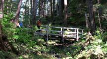 Rainforest:  Hikers Cross A Bridge